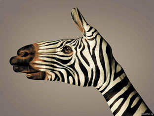animals_pravo