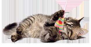kitten_1